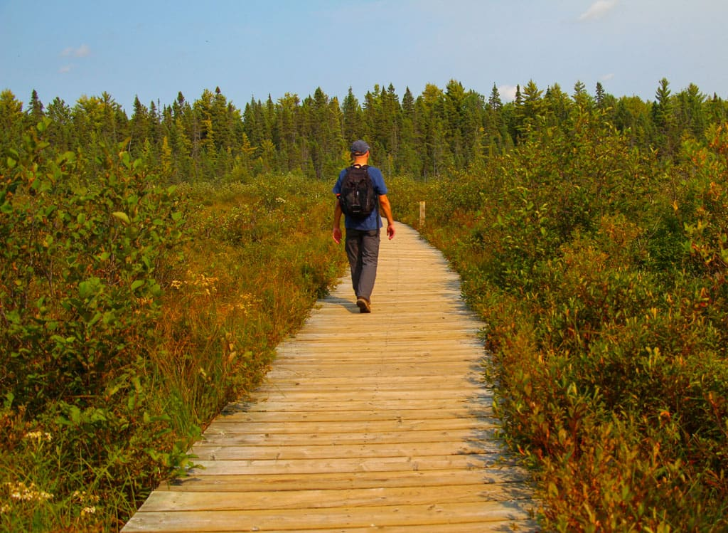Person on boardwalk through Spruce Bog Algonquin Park