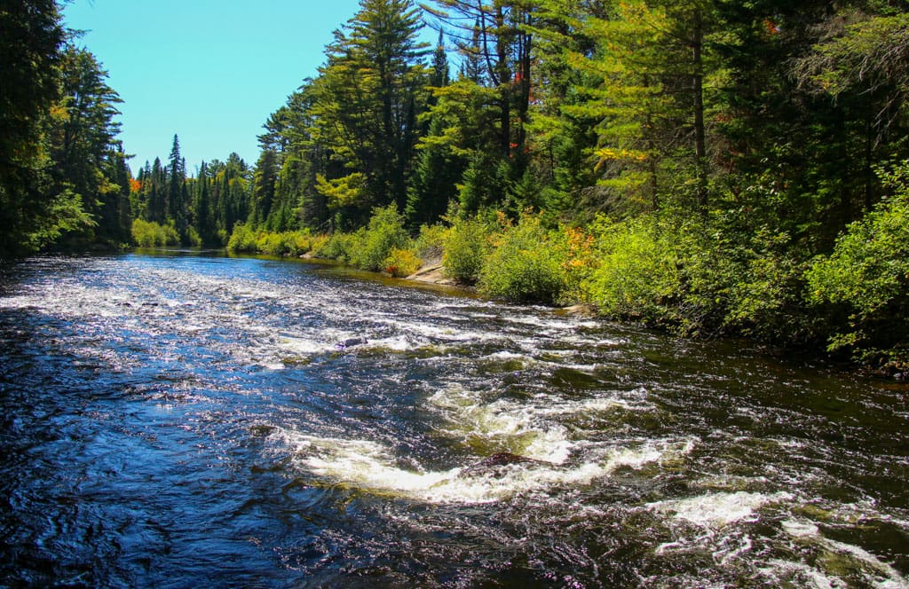 Whiskey Rapids through Algonquin Park forest