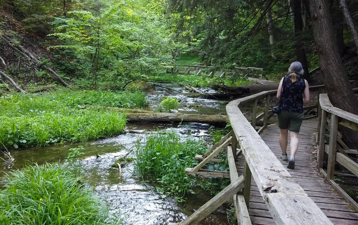 Walk boardwalk Weavers Creek Falls