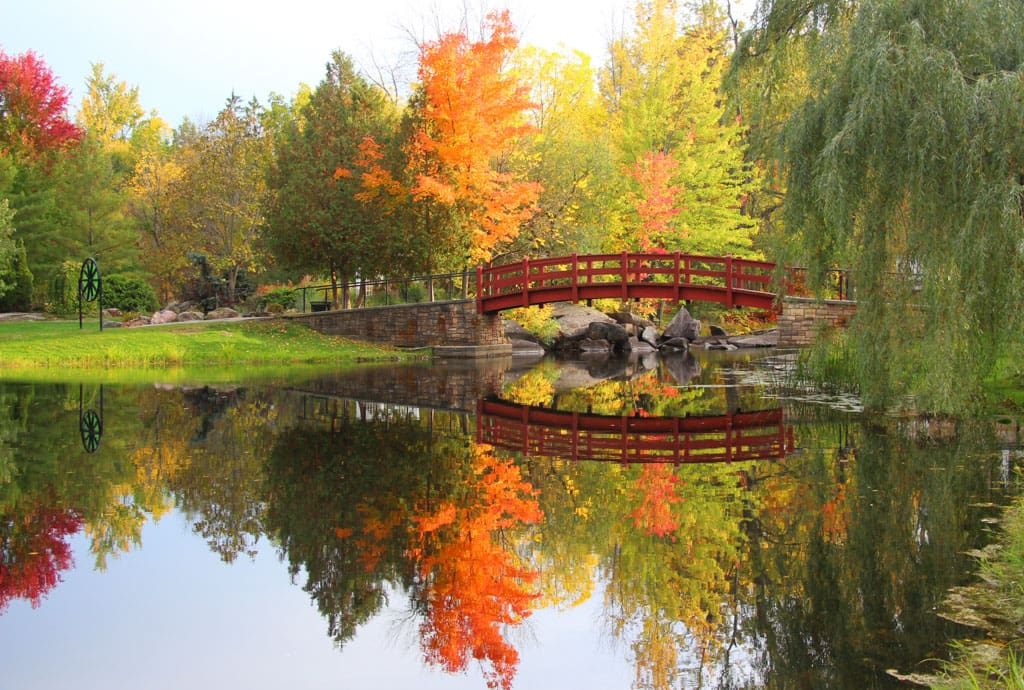 Reflection of bridge and trees in river