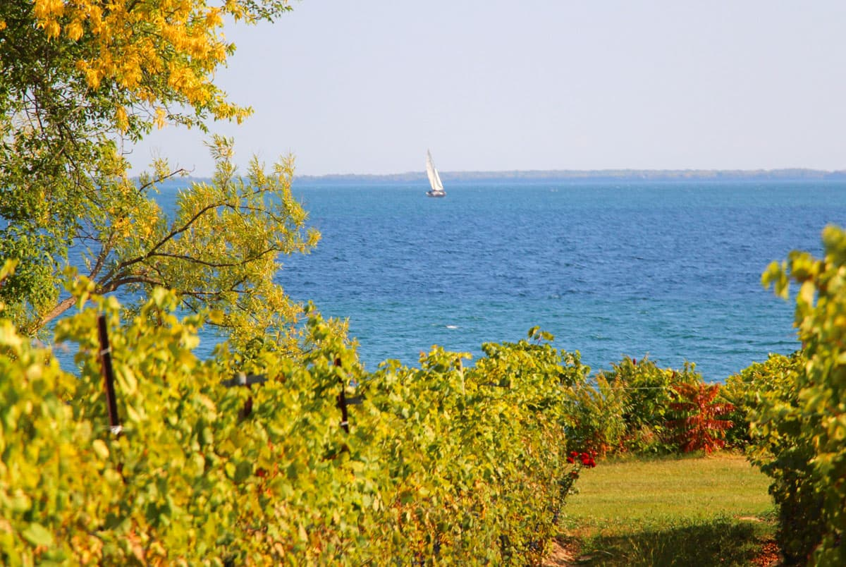 The Vineyards overlook Lake Ontario at Waupoos Estates Winery