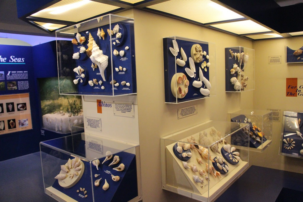 Seashell Displays - Bailey Matthews Shell Museum