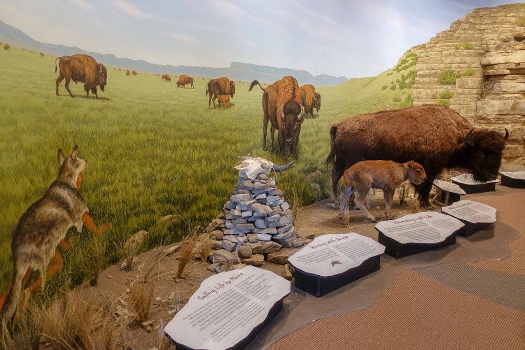 Visitor center exhibit of bison on prairie