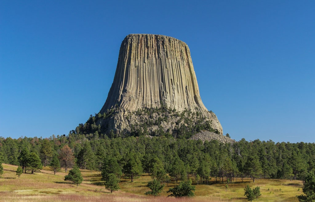 Grassland and pine foreground Devils Tower background
