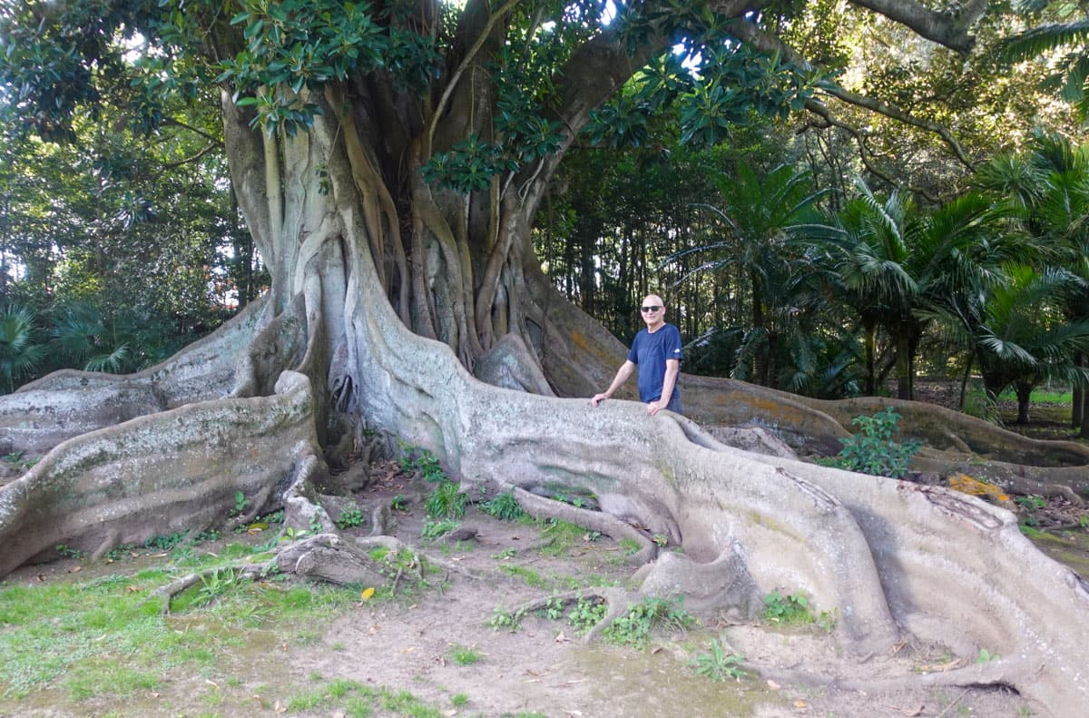 Man standing by tree's buttress root