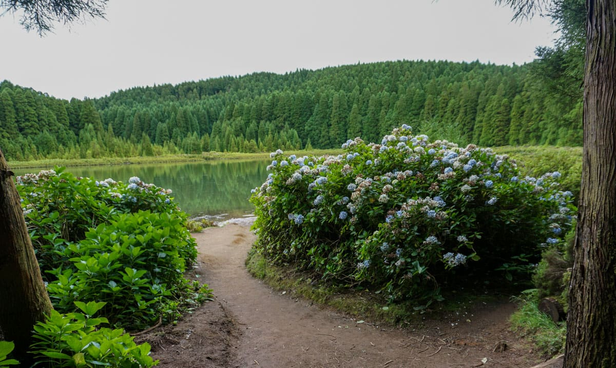 Hydrangeas path Canary Lake Sete Cidades