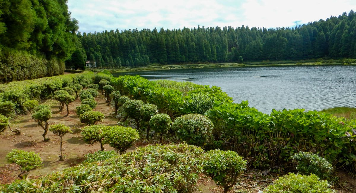 Azealea bushes by Empadadas Lake Sete Cidades