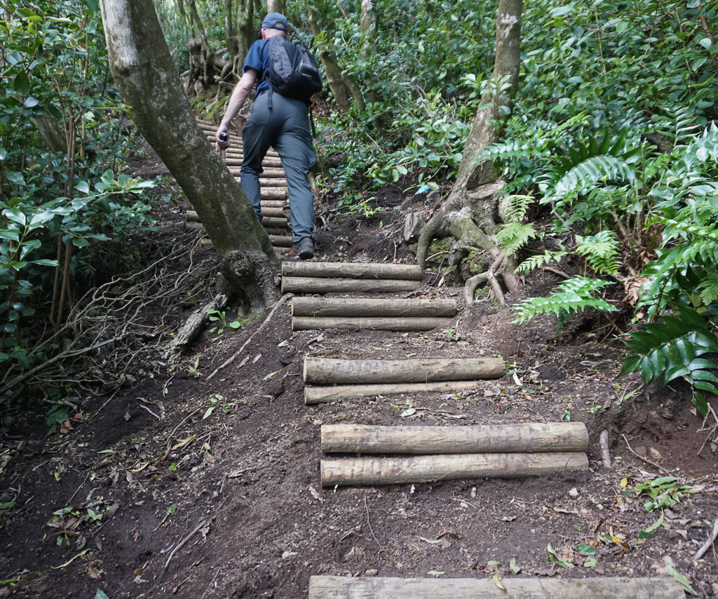 Climbing log steps Ribeirinha Trail Faial